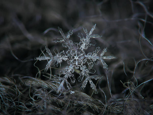Snowflake 2 Of 19 March 2013 Art Print