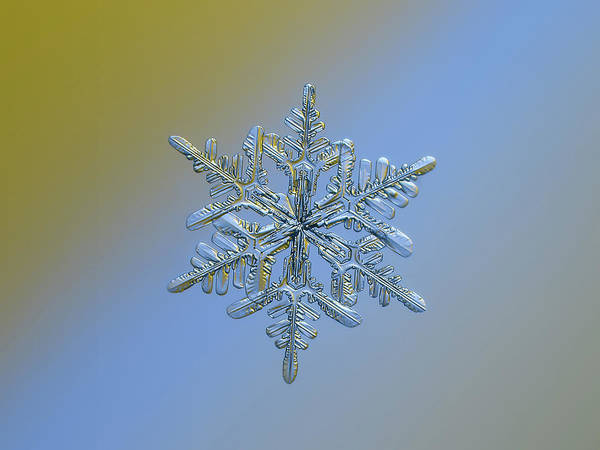 Photograph - Snowflake Macro Photo - 13 February 2017 - 1 Alt by Alexey Kljatov