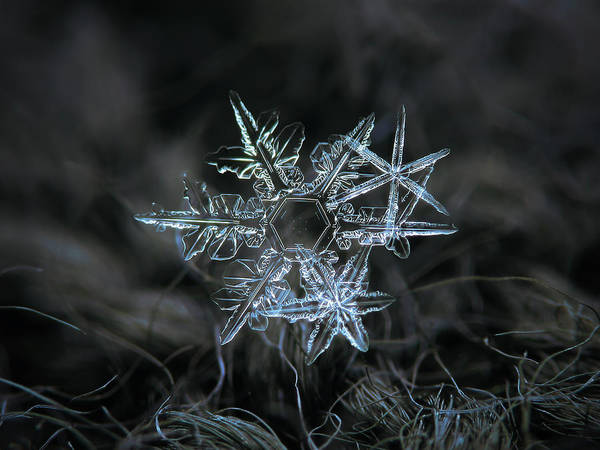 Photograph - Snowflake Of 19 March 2013 by Alexey Kljatov