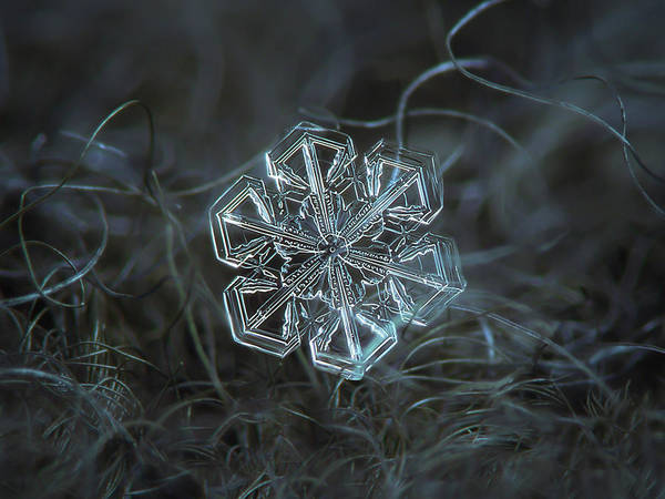 Photograph - Snowflake Photo - Alcor by Alexey Kljatov
