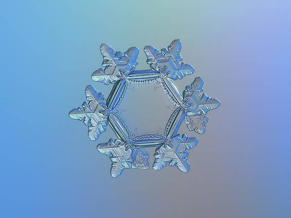 Snowflake Photo - Sunflower Art Print
