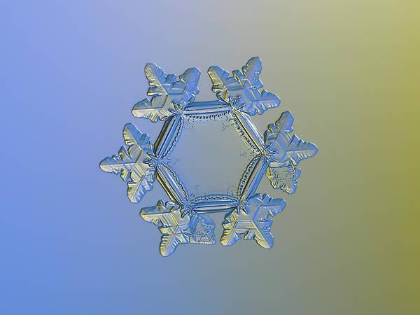 Photograph - Snowflake Photo - Sunflower, Golden Version by Alexey Kljatov