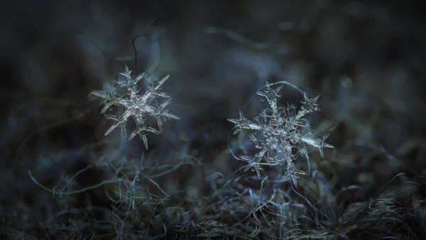 Snowflake Photo - When Winters Meets - 2 Art Print
