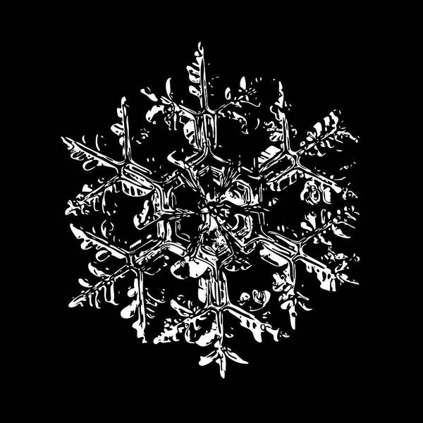 Digital Art - Snowflake Vector - Gardener's Dream Black Version by Alexey Kljatov