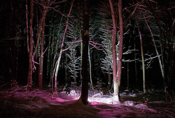 Night Time Photograph - Snowgenta by Jerry LoFaro