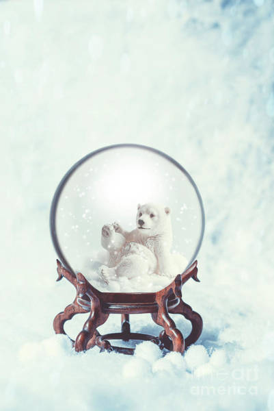 Polar Bear Photograph - Snowglobe by Amanda Elwell