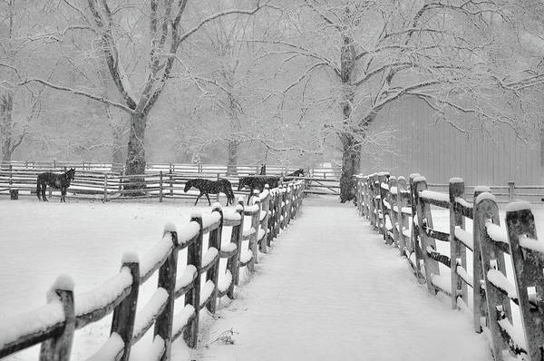 Photograph - Snowing At Widener Farms - Whitemarsh Pa by Bill Cannon