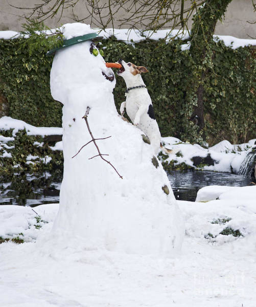 Photograph - Snowman And Terrier by Brian Bevan