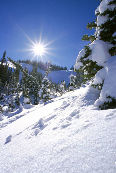 Wintry Photograph - Snowscape With Bright Sun by American School