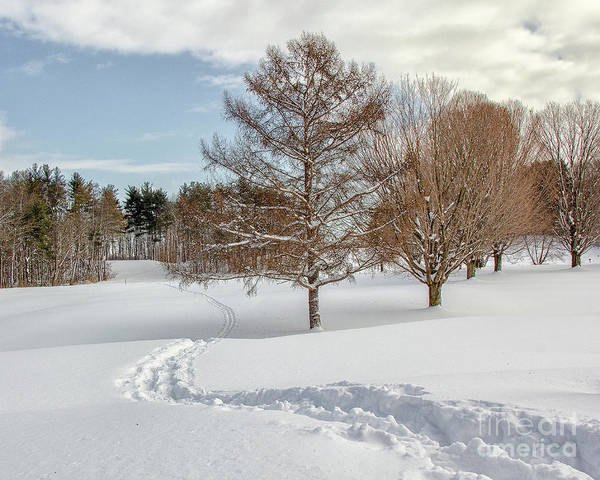 Photograph - Winter Path by Rod Best
