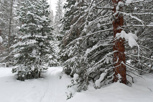 Photograph - Snowshoeing Through Rocky Mountain National Park by Cascade Colors