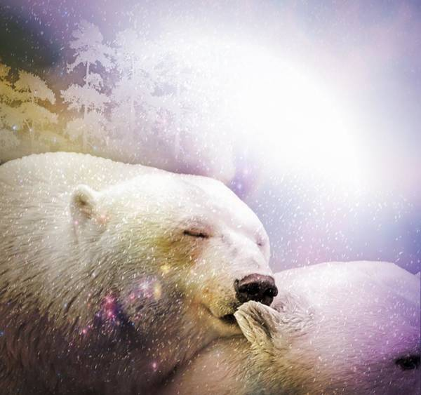 Photograph - Snowstorm Kisses by Ericamaxine Price