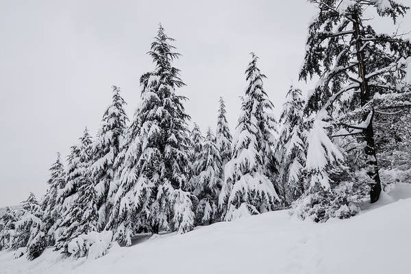Photograph - Snowy-1 by Okan YILMAZ