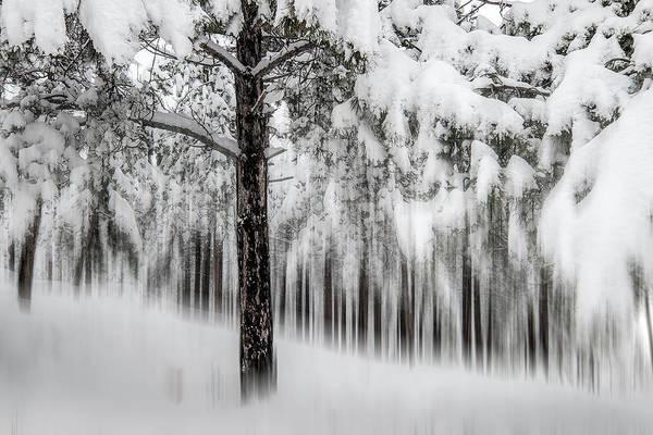 Photograph - Snowy-2 by Okan YILMAZ