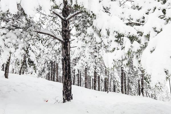 Photograph - Snowy-4 by Okan YILMAZ