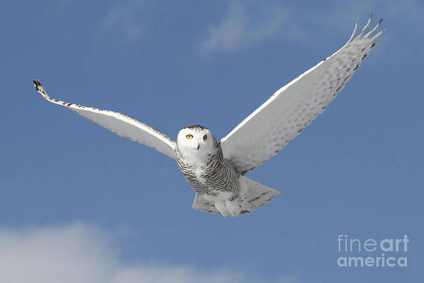 Wall Art - Photograph - Snowy Angel by Heather King