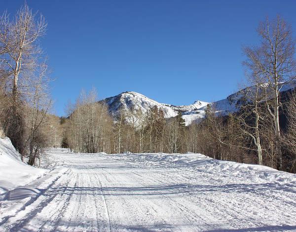 Snowy Aspen Art Print
