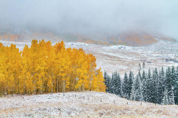 Photograph - Snowy Autumn Scene In Crested Butte Colorado by Teri Virbickis