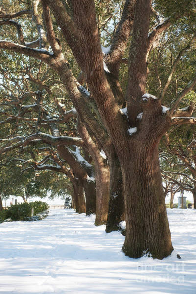 Photograph - Snowy Battery And Whitepoint Garden by Dale Powell
