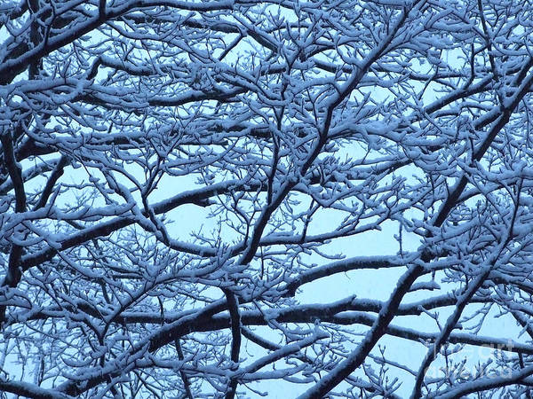 Photograph - Snowy Branches Landscape Photograph by Kristen Fox