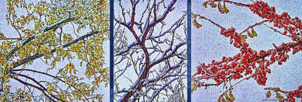 Digital Art - Snowy Branches Trio - Triptych by Joel Bruce Wallach