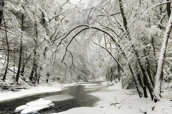 Trout Stream Photograph - Snowy Clarks Creek by Lori Deiter