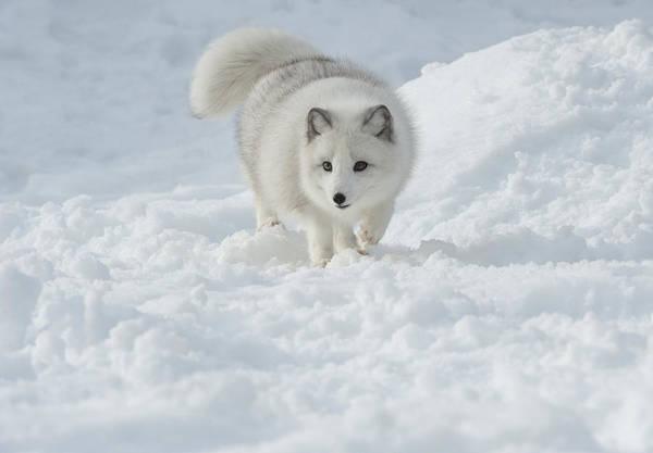 Bronstein Photograph - Snowy Day Stroll by Sandra Bronstein