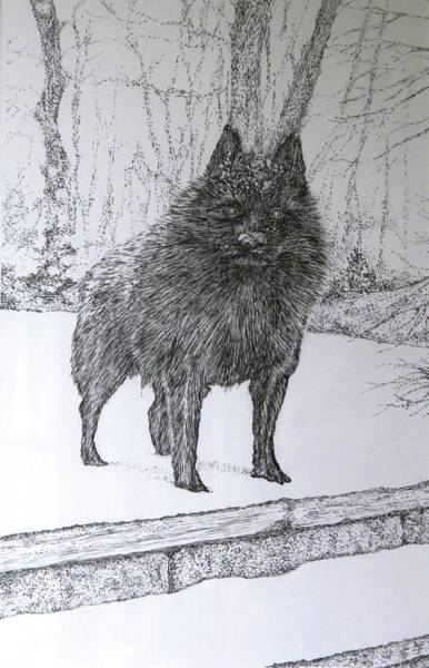 Furry Drawing - Winter Shadow by Janice Petrella-Walsh