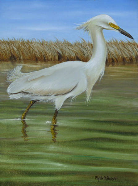 Wall Art - Painting - Snowy Egret 1 by Phyllis Beiser