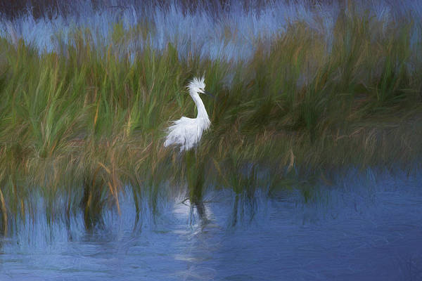 Photograph - Snowy Egret by Dawn J Benko