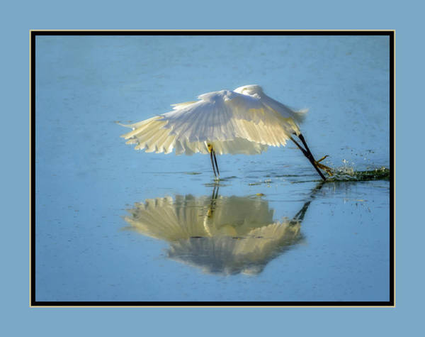 Photograph - Snowy Egret Fishing 9438-050818-1cr-matte by Tam Ryan