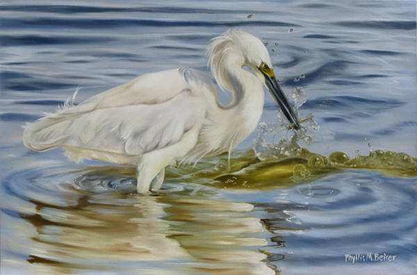 Wall Art - Painting - Snowy Egret Hunting Shrimp by Phyllis Beiser