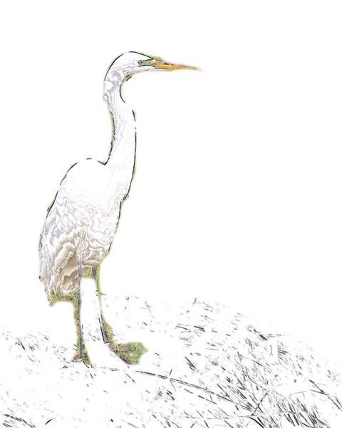 Digital Art - Snowy Egret Minimal by John Feiser
