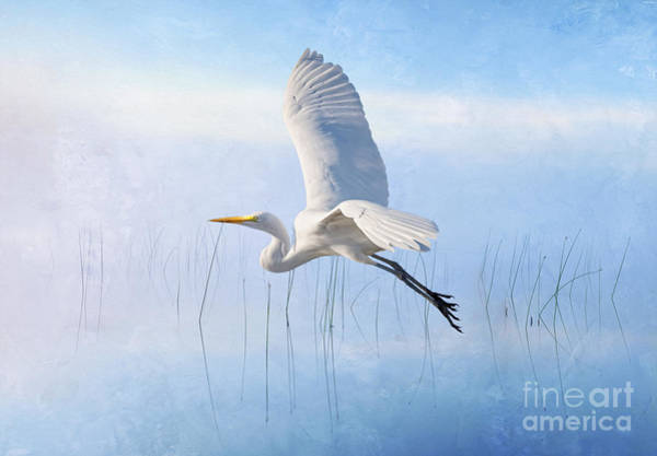 Wall Art - Photograph - Snowy Egret Morning by Laura D Young