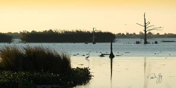Photograph - Snowy Egret On The Bayou Venice Louisiana by Paul Gaj