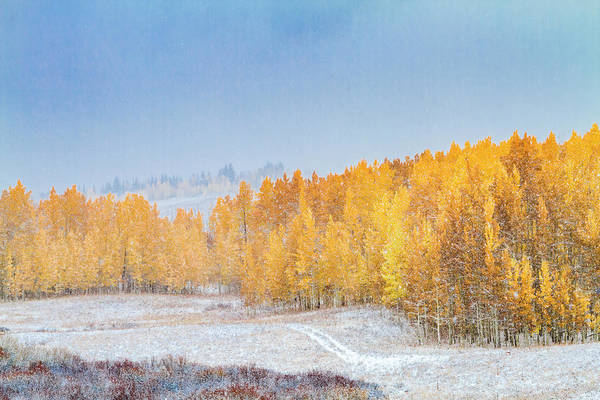 Photograph - Snowy Fall Morning In Colorado Mountains by Teri Virbickis