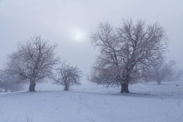 Photograph - Snowy Foggy Sun Burning by James BO Insogna