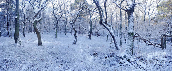 Photograph - Snowy Forest Panorama by Warren Photographic