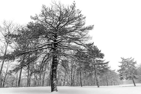 Photograph - Snowy Giant by Michael Arend
