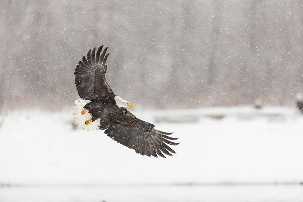 Wall Art - Photograph - Snowy Landing by Tim Grams