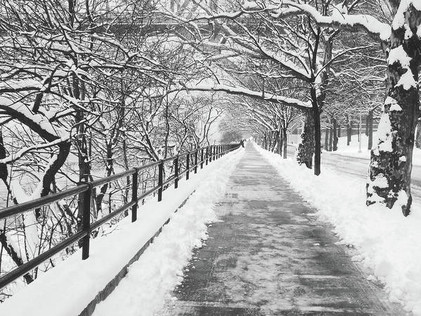 Bernadette Photograph - Snowy Lane by Bernadette Claffey