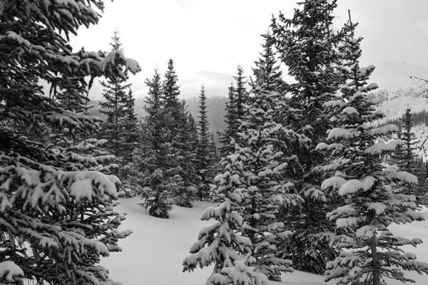 Photograph - Snowy Morning Beneath Berthoud Pass by Cascade Colors