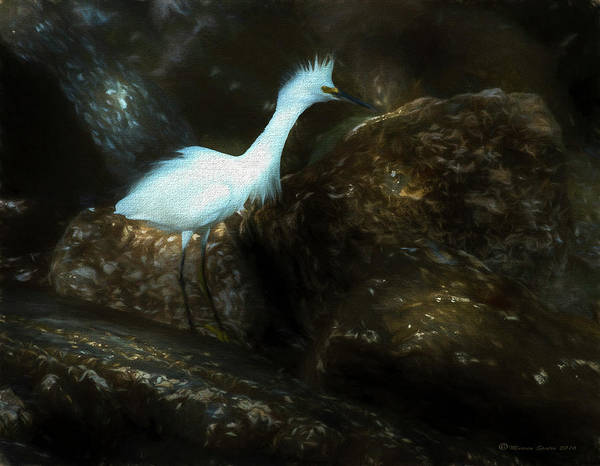 Waterbird Photograph - Snowy On The Rocks by Marvin Spates