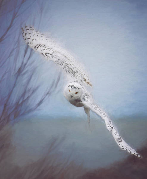 Wall Art - Photograph - Snowy Owl In Flight Painting 2 by Carrie Ann Grippo-Pike