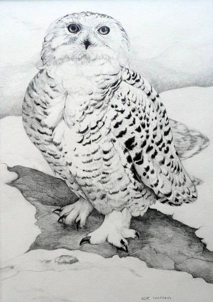 Avian Drawing - Snowy Owl by Jill Iversen
