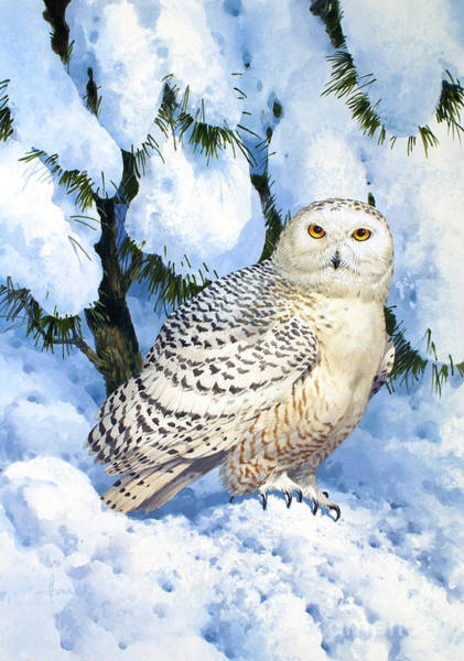 Owl Painting - Snowy Owl by MGL Meiklejohn Graphics Licensing
