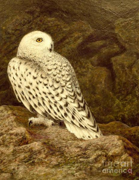 Snowy Owl Art Print by Marc Dmytryshyn