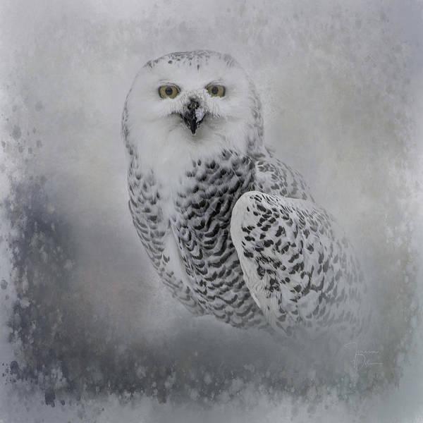 Photograph - Snowy Owl Portrait by Teresa Wilson