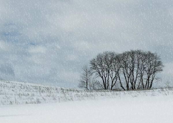 Snowy Pasture Art Print by JAMART Photography