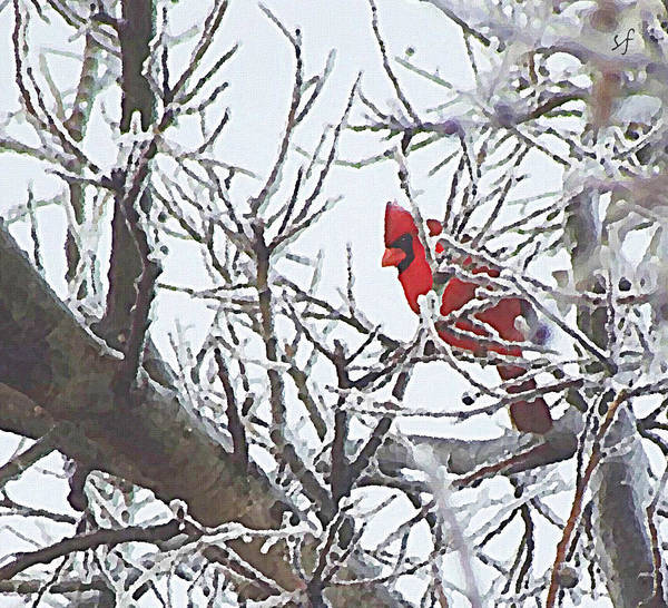 Snowy Red Bird A Cardinal In Winter Art Print